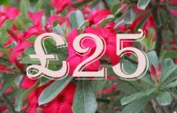 £25.00 Gift Certificate