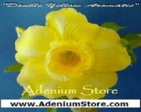 Grow Adenium Seeds - Easy Germination Guide
