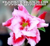 Adenium 'Double Iron Man' 5 Seeds