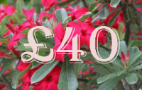 £40.00 Gift Certificate