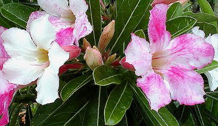 Frucht amp Nutzpflanzen D  SunshineSeeds